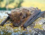 سايبردودو و الخفافيش (1-29)