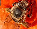 سايبردودو و النحل (1-5)