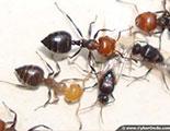 اختبار حول النمل (1-1)