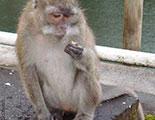 اختبار حول القرود (1-13)