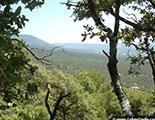 اختبار حول الغابات (1-9)