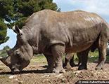 اختبار حول وحيد القرن (1-28)