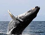 اختبار حول الحيتان  (1-10)