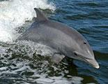 اختبار حول الدلافين (1-11)