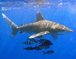 اختبار حول اسماك القرش (1-27)