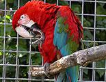 اختبار حول التجارة بالحيوانات البرية (1-30)
