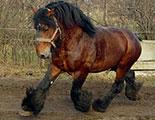 اختبار حول خيول الجر (1-36)