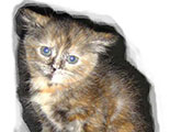 اختبار حول الحيوانات المهجورة (1-43)